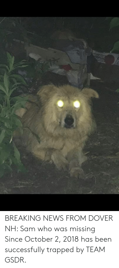 Memes, News, and Breaking News: NNADE BREAKING NEWS FROM DOVER NH:  Sam who was missing Since October 2, 2018 has been successfully trapped by TEAM GSDR.