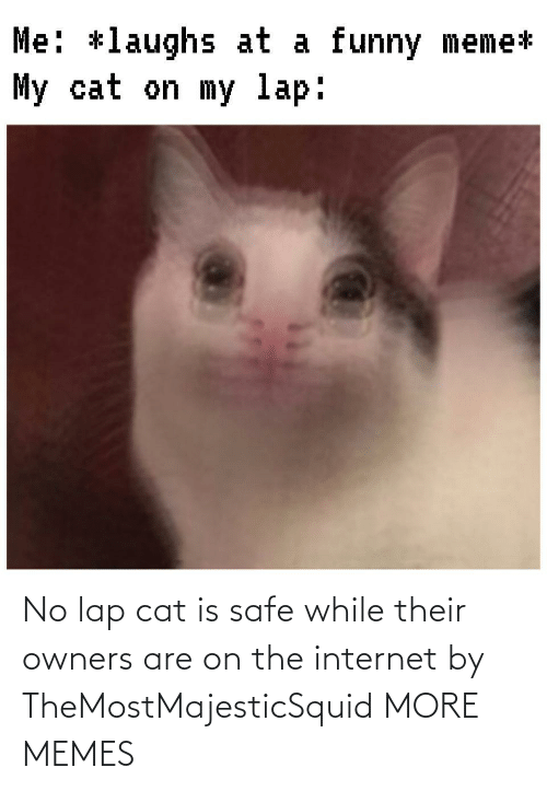the internet: No lap cat is safe while their owners are on the internet by TheMostMajesticSquid MORE MEMES