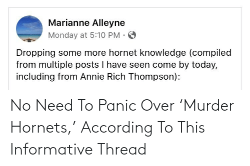 panic: No Need To Panic Over 'Murder Hornets,' According To This Informative Thread
