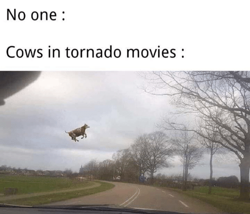 Memes, Movies, and Tornado: No one  Cows in tornado movies: