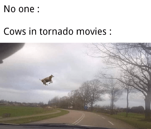 Movies, Tornado, and One: No one:  Cows in tornado movies: