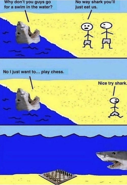 Memes, Shark, and Chess: No way shark you'll  just eat us.  Why don't you guys go  for a swim in the water?  No I just want to... play chess  Nice try shark