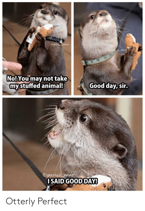 Animal, Good, and May: No! You may not take  mystuffed animal!  Good day, sir.  Oparus m  OSAID GOOD DAY! Otterly Perfect