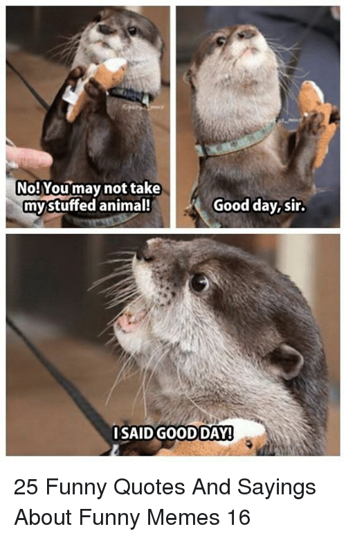 stuffed animal: No!Youmay not take  my stuffed animal!  Good day,sir.  SAID GOODDAY! 25 Funny Quotes And Sayings About Funny Memes 16