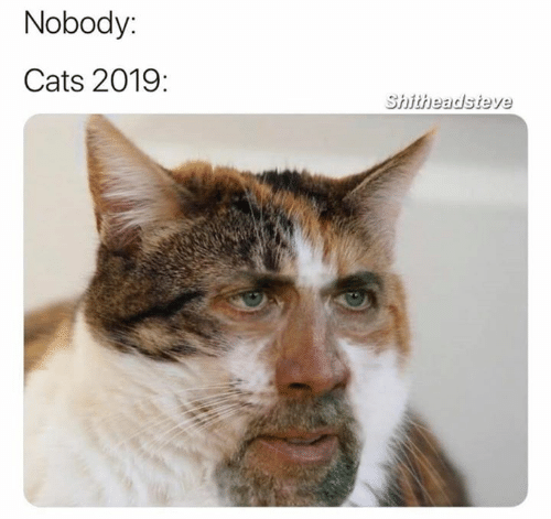 Cats, Nobody, and Shitheadsteve: Nobody:  Cats 2019:  Shitheadsteve