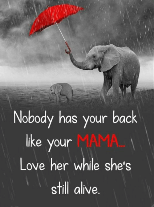 still alive: Nobody has your back  like your MAMA...  Love her while she's  still alive.