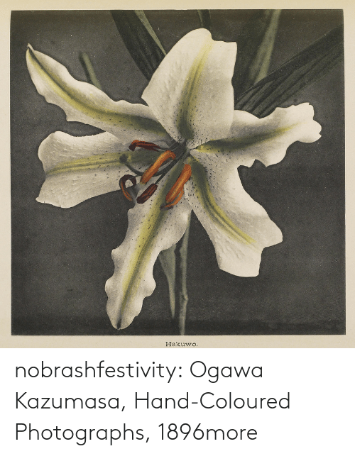 Tumblr, Blog, and Http: nobrashfestivity:  Ogawa Kazumasa, Hand-Coloured Photographs, 1896more
