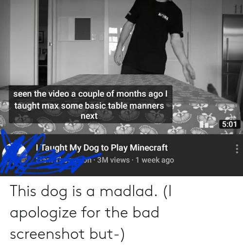Bad, Minecraft, and Video: NOIKA  seen the video a couple of months agol  taught max some basic table manners  next  5:01  I Taught My Dog to Play Minecraft  on 3M views 1 week ago This dog is a madlad. (I apologize for the bad screenshot but-)