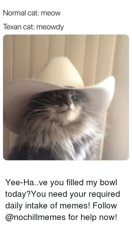 Memes, Yee, and Help: Normal cat: meow  Texan cat: meowdy Yee-Ha..ve you filled my bowl today?You need your required daily intake of memes! Follow @nochillmemes for help now!