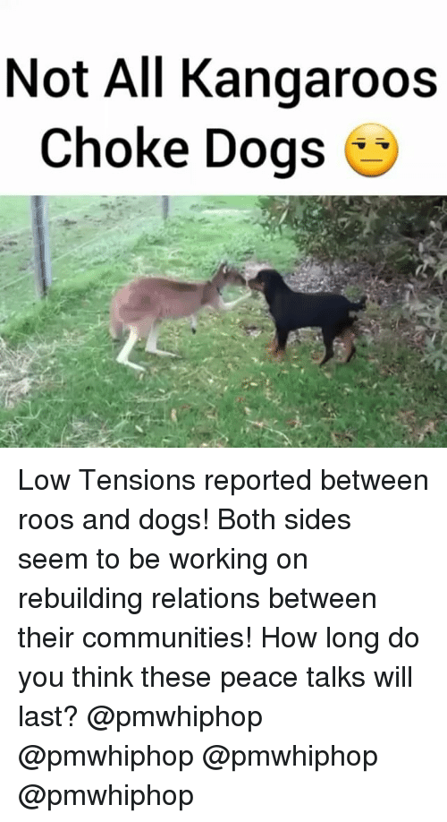 Relaters: Not All Kangaroos  choke Dogs Low Tensions reported between roos and dogs! Both sides seem to be working on rebuilding relations between their communities! How long do you think these peace talks will last? @pmwhiphop @pmwhiphop @pmwhiphop @pmwhiphop