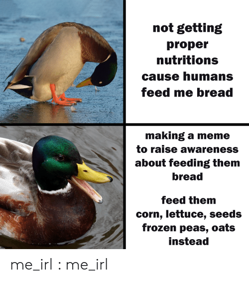 Frozen, Meme, and Irl: not getting  proper  nutritions  cause humans  feed me bread  making a meme  to raise awareness  about feeding them  bread  feed them  corn, lettuce, seeds  frozen peas, oats  instead  @der.leong me_irl : me_irl