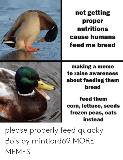 Making A Meme: not getting  proper  nutritions  cause humans  feed me bread  making a meme  to raise awareness  about feeding them  bread  feed them  corn, lettuce, seeds  frozen peas, oats  instead please properly feed quacky Bois​ by mintlord69 MORE MEMES