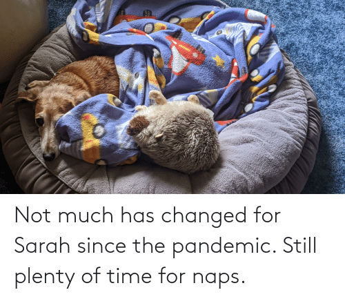 Naps: Not much has changed for Sarah since the pandemic. Still plenty of time for naps.