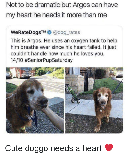 Cute, Heart, and Help: Not to be dramatic but Argos can have  my heart he needs it more than me  WeRateDogsTM@dog rates  This is Argos. He uses an oxygen tank to help  him breathe ever since his heart failed. It just  couldn't handle how much he loves you.  14/10 Cute doggo needs a heart ❤️