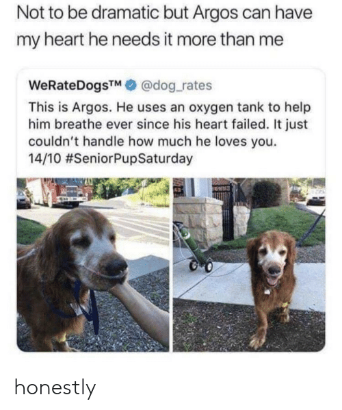 Heart, Help, and Oxygen: Not to be dramatic but Argos can have  my heart he needs it more than me  WeRateDogsTM@dog rates  This is Argos. He uses an oxygen tank to help  him breathe ever since his heart failed. It just  couldn't handle how much he loves you.  14/10 honestly