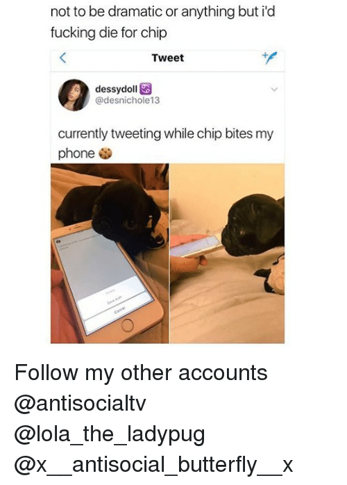 lolas: not to be dramatic or anything but i'd  fucking die for chip  Tweet  dessydoll  @desnichole13  currently tweeting while chip bites my  phone . Follow my other accounts @antisocialtv @lola_the_ladypug @x__antisocial_butterfly__x