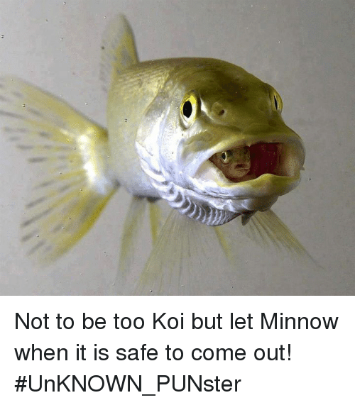 Memes, 🤖, and Unknown: Not to be too Koi but let Minnow when it is safe to come out!   #UnKNOWN_PUNster