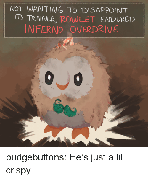 Tumblr, Blog, and Http: NOT WANTING TO DISAPPOINT  ITS TRAINER, ROWLET ENDURED  INFERNO OVERDRIVE budgebuttons:  He's just a lil crispy