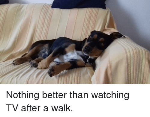 25 Best Memes About Watching Tv Watching Tv Memes