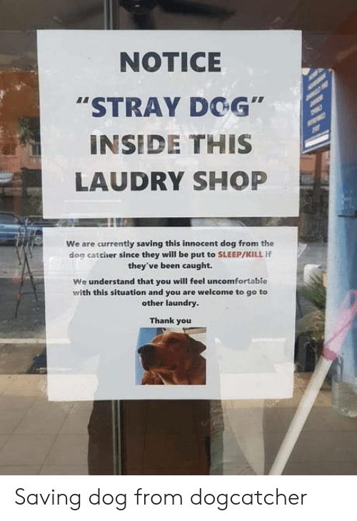 """Dog Catcher: NOTICE  """"STRAY DOG""""  INSIDE THIS  LAUDRY SHOP  We are currently saving this innocent dog from the  dog catcher since they will be put to SLEEP/KILL If  they've been caught.  We understand that you will feel uncomfortable  with this situation and you are welcome to go to  other laundry.  Thank you Saving dog from dogcatcher"""