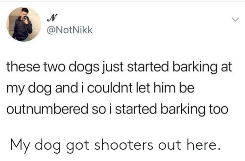 Dank, Dogs, and Shooters: @NotNikk  these two dogs just started barking at  my dog and i couldnt let him be  outnumbered so i started barking too My dog got shooters out here.