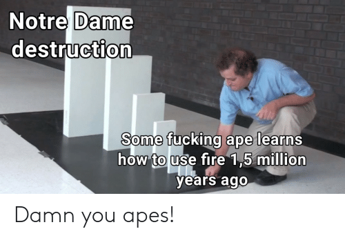 Fucking, Notre Dame, and How: Notre Dame  destruction  Some fucking ape learns  how touse tire 15 miuion  years ago Damn you apes!
