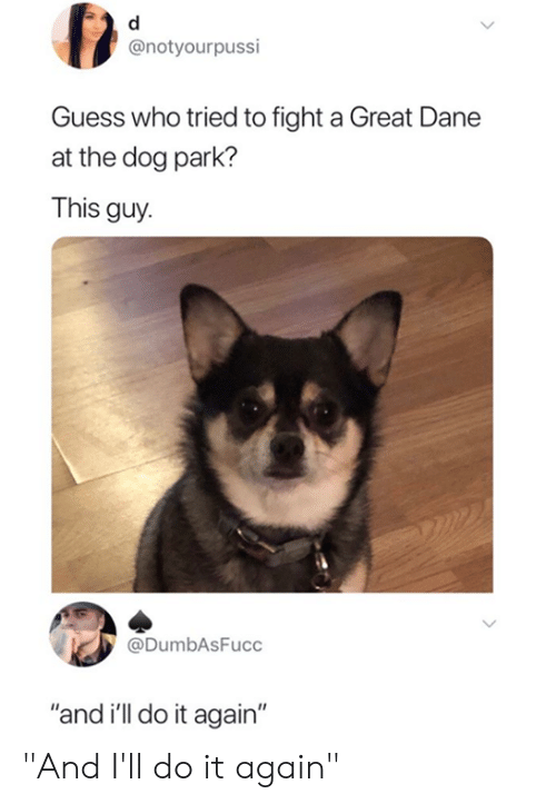 """Do It Again, Memes, and Guess: @notyourpussi  Guess who tried to fight a Great Dane  at the dog park?  This guy  @DumbAsFucc  """"and i'll do it again"""" """"And I'll do it again"""""""