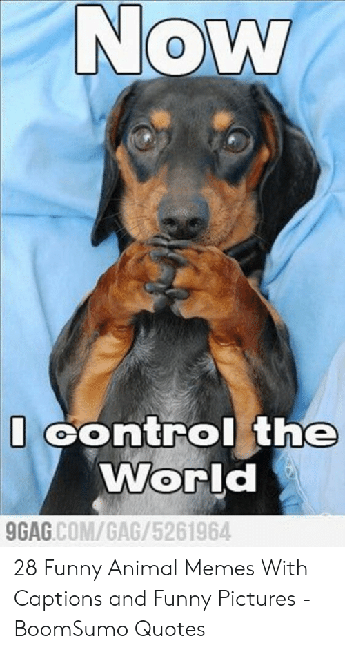 And Funny: Now  Control the  World  GAG.COM/GAG/5261964 28 Funny Animal Memes With Captions and Funny Pictures - BoomSumo Quotes