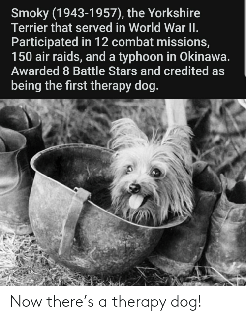 therapy: Now there's a therapy dog!