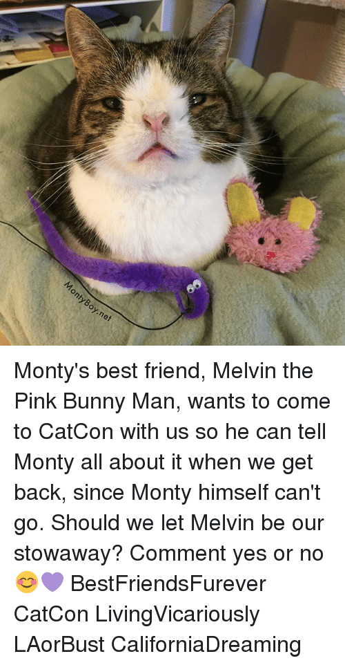 pinkly: nty  Boy.nef Monty's best friend, Melvin the Pink Bunny Man, wants to come to CatCon with us so he can tell Monty all about it when we get back, since Monty himself can't go. Should we let Melvin be our stowaway? Comment yes or no 😊💜 BestFriendsFurever CatCon LivingVicariously LAorBust CaliforniaDreaming