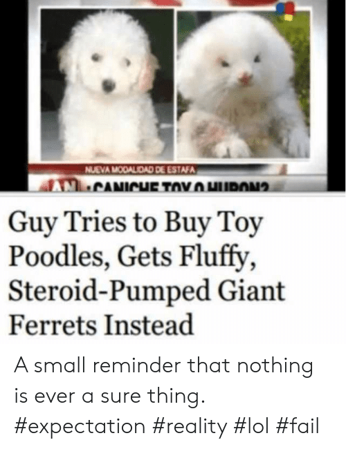 Buy: NUEVA MODALIDAD DE ESTAFA  CANICHE TOYHURON  Guy Tries to Buy Toy  Poodles, Gets Fluffy  Steroid-Pumped Giant  Ferrets Instead A small reminder that nothing is ever a sure thing. #expectation #reality #lol #fail