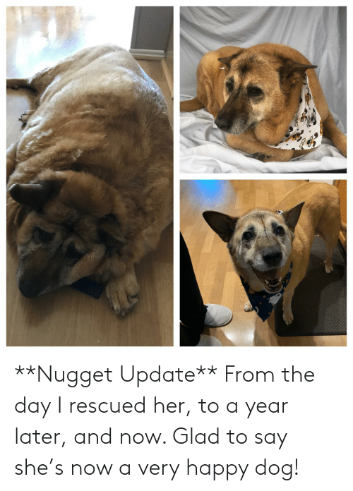 Happy, Her, and Dog: **Nugget Update** From the day I rescued her, to a year later, and now. Glad to say she's now a very happy dog!