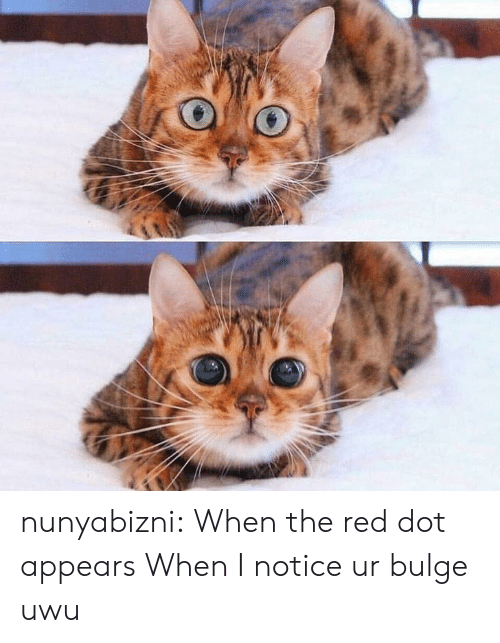Target, Tumblr, and Blog: nunyabizni: When the red dot appears  When I notice ur bulge uwu