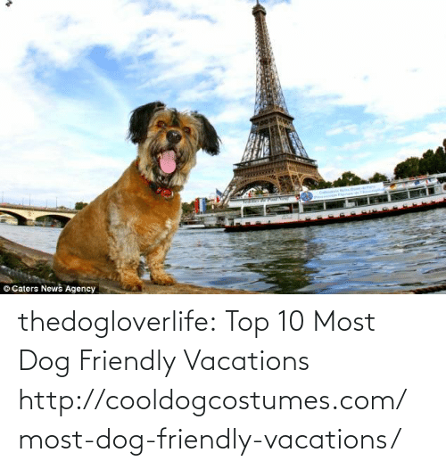 Vacations: O Caters News Agency thedogloverlife:  Top 10 Most Dog Friendly Vacations  http://cooldogcostumes.com/most-dog-friendly-vacations/