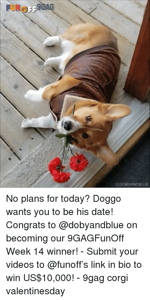 9gag, Corgi, and Memes: O DOBYANDBLUE No plans for today? Doggo wants you to be his date! Congrats to @dobyandblue on becoming our 9GAGFunOff Week 14 winner! - Submit your videos to @funoff's link in bio to win US$10,000! - 9gag corgi valentinesday