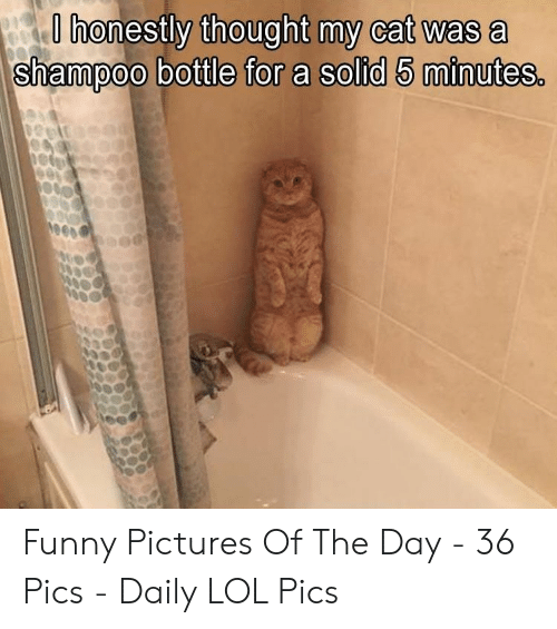 funny pictures: O honestly thought my cat was a  shampoo bottle for a solid 5 minutes. Funny Pictures Of The Day - 36 Pics - Daily LOL Pics