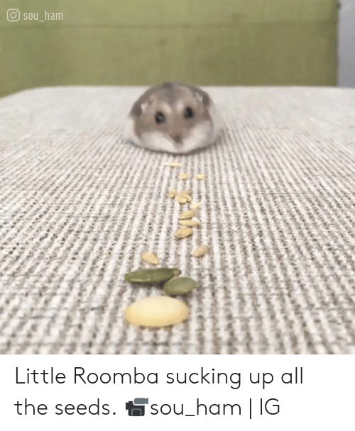 Roomba: O sou ham Little Roomba sucking up all the seeds.  📹sou_ham | IG