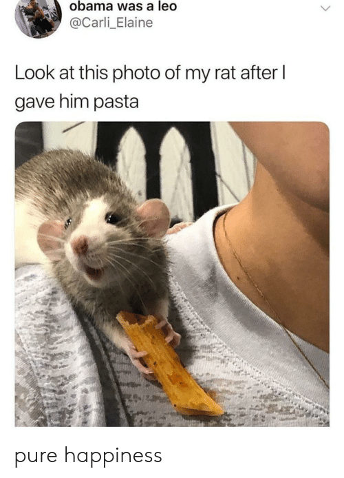 Carli: obama was a leo  @Carli_Elaine  Look at this photo of my rat after l  gave him pasta pure happiness