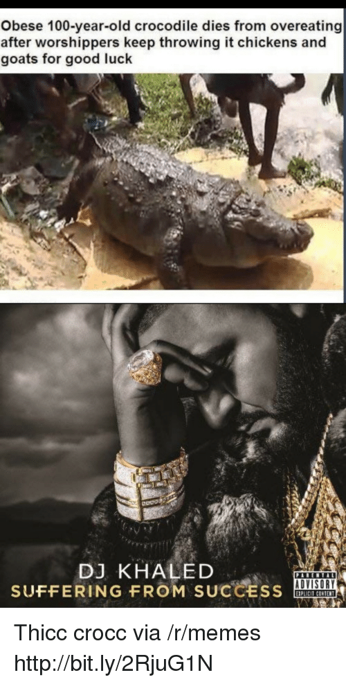 overeating: Obese 100-year-old crocodile dies from overeating  after worshippers keep throwing it chickens and  goats for good luck  Odos  DJ KHALED  SUFFERING FROM SUCCSOA  ADVISORY  IPLICIT CONTENT Thicc crocc via /r/memes http://bit.ly/2RjuG1N