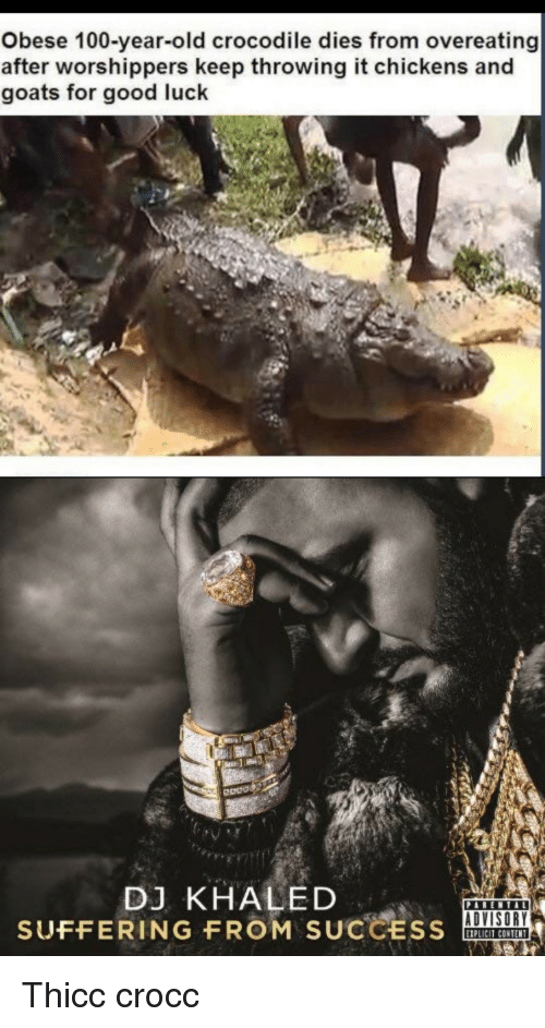 overeating: Obese 100-year-old crocodile dies from overeating  after worshippers keep throwing it chickens and  goats for good luck  Odos  DJ KHALED  SUFFERING FROM SUCCSOA  ADVISORY  IPLICIT CONTENT Thicc crocc