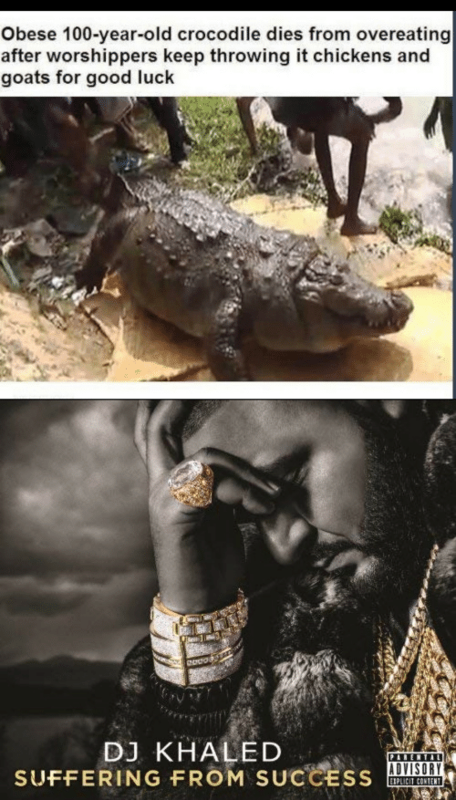 overeating: Obese 100-year-old crocodile dies from overeating  after worshippers keep throwing it chickens and  goats for good luck  DJ KHALED  SUFFERING FROM SUCCESS  PARENTAL  EIPLICIT CONTENT