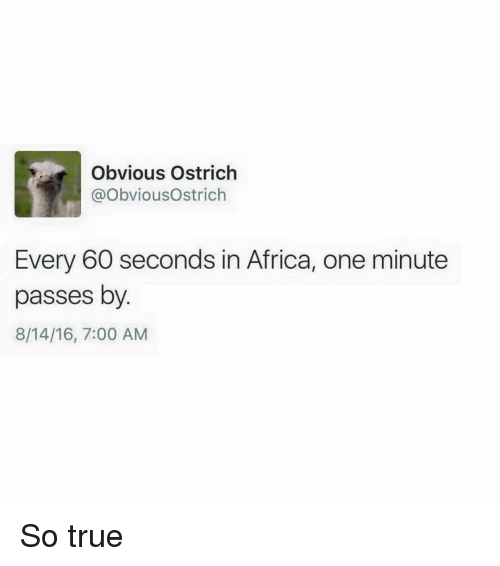 Obvious Ostrich