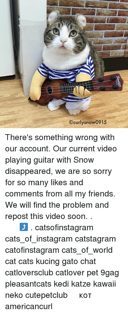 9gag, Cats, and Friends: Ocurlysnow0915 There's something wrong with our account. Our current video playing guitar with Snow disappeared, we are so sorry for so many likes and comments from all my friends. We will find the problem and repost this video soon. . 先ほどの投稿、なぜか消えてしまいました。コメントしてくださった方すみません😥またアップします⤴️ . catsofinstagram cats_of_instagram catstagram catofinstagram cats_of_world cat cats kucing gato chat catloversclub catlover pet 9gag pleasantcats kedi katze kawaii neko cutepetclub 고양이 кот แมว 猫 americancurl
