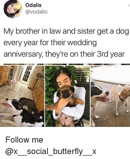 brother in law: Odalis  @vodalic  My brother in law and sister get a dog  every year for their wedding  anniversary, they're on their 3rd year Follow me @x__social_butterfly__x