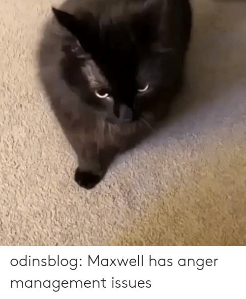 Anger Management: odinsblog:   Maxwell has anger management issues