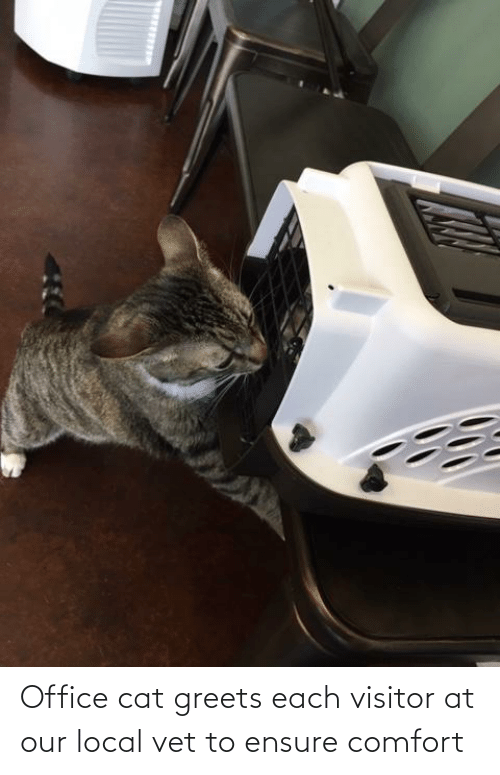 Ensure: Office cat greets each visitor at our local vet to ensure comfort