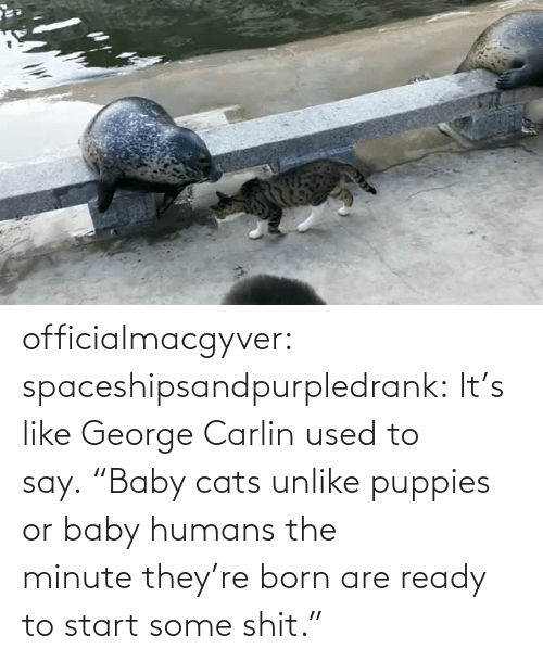 "born: officialmacgyver:  spaceshipsandpurpledrank:  It's like George Carlin used to say. ""Baby cats unlike puppies or baby humans the minute they're born are ready to start some shit."""