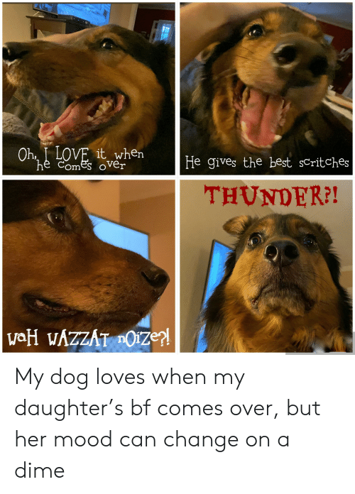 Love, Mood, and Best: Oh, I LOVE it when  he comes oVver  He gives the best scritches  THUNDER?!  vaH WAZZAT OIze?! My dog loves when my daughter's bf comes over, but her mood can change on a dime