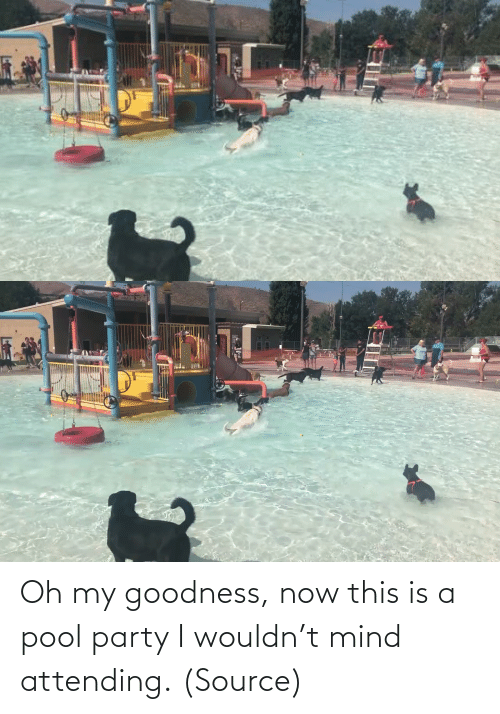 Puppy: Oh my goodness, now this is a pool party I wouldn't mind attending. (Source)