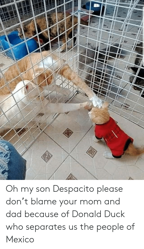 Dad, Duck, and Mexico: Oh my son Despacito please don't blame your mom and dad because of Donald Duck who separates us the people of Mexico